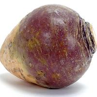 See the rutabaga that took the first steps on the moon!